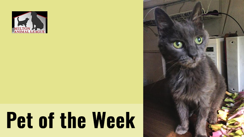 Pet of the Week: Cloud
